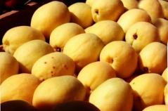 Абрикос колонновидный Ананасовый<br>Абрикос колоновидний Ананасовий<br>Prunus armeniaca columnar Аnanasovij