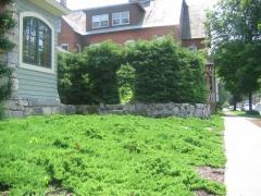 Можжевельник  'Green Carpet'