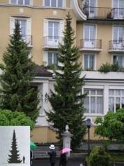 Picea omorika Ель сербская