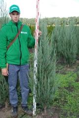 Можжевельник Скайрокет 1,6 м