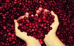 Журавлина Пілігрім плоди