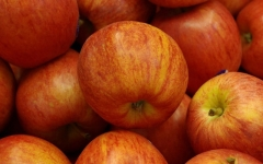 Яблуня Gala