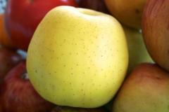 Яблоня Золотое Превосходство