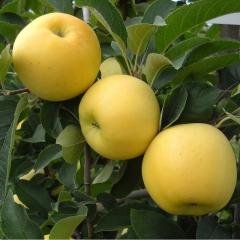 Яблуня Golden Delicious