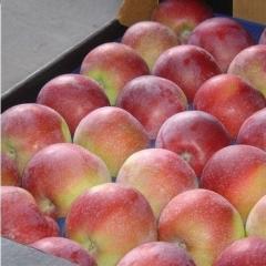Яблоня домашняя Лиголь
