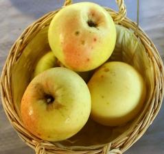 Apple tree Mutsu