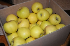 Яблоня домашняя Mutsu