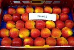 Яблоня домашняя Pinova