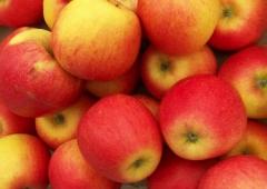 Яблуня домашня Pinova