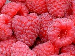 Raspberries Glen Ample