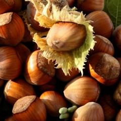 Фундук обыкновенный Косфорд <br>Фундук звичайний Косфорд <br>Corylus avellana Cosford