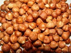 Ядро плода Ліщини звичайної Cosford