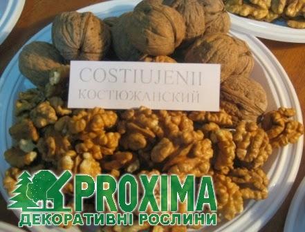Актинидия саженцы купить сорта для москвы и подмосковья