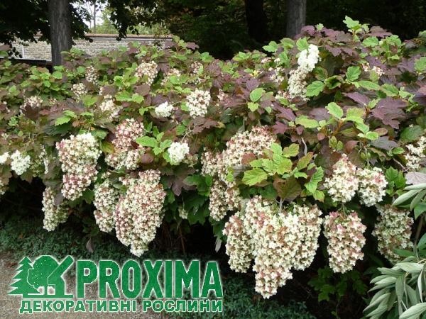 что удобрение agromax купить цена