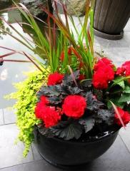 Вариант применения Императа цилиндрическая Red Baron в вазе с другими яркими растениями